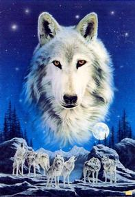 buy Born Free Foundation - Wolves/Moon