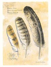secondary flight feathers of eagles and hawks