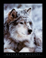 John Pezzenti Jr - Timber Wolf